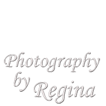 www.reginaledgerwoodphotography.com